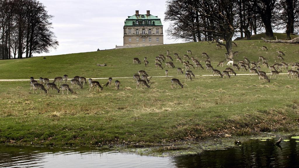 Resultado de imagen de dyrehaven denmark
