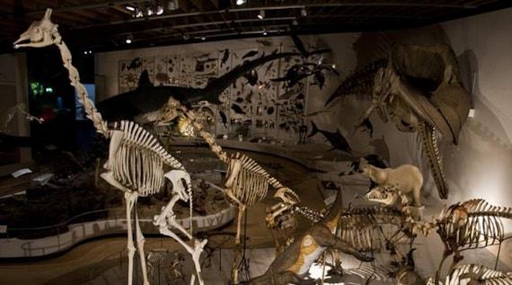 Natural History Museum Of Denmark Tripadvisor