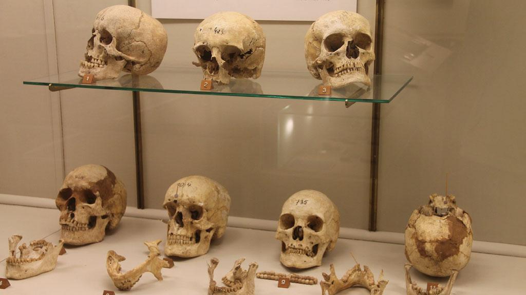 Museum vill aterlamna kranier