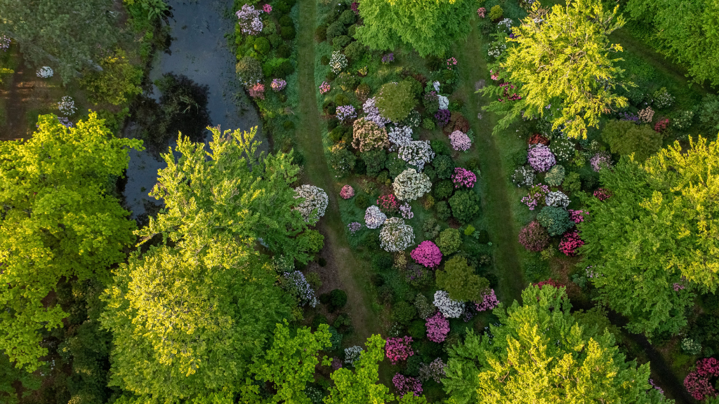 Rhododendron med drone