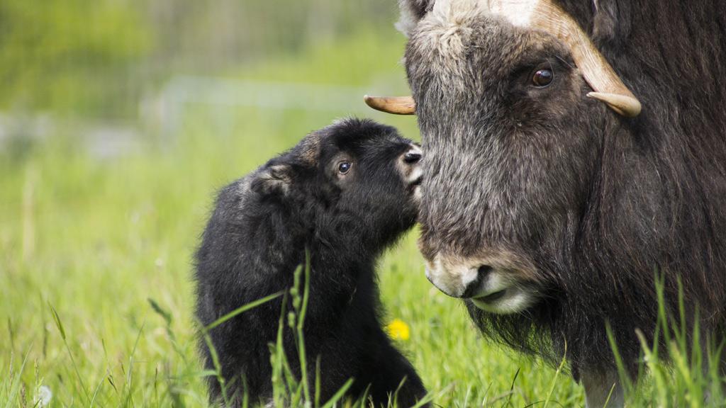 Skandinavisk Dyrepark | Visitdjursland