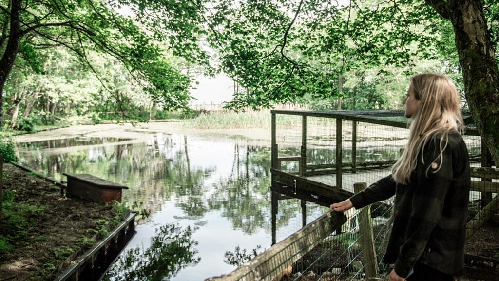 Søen ved Albue Fuglekøje