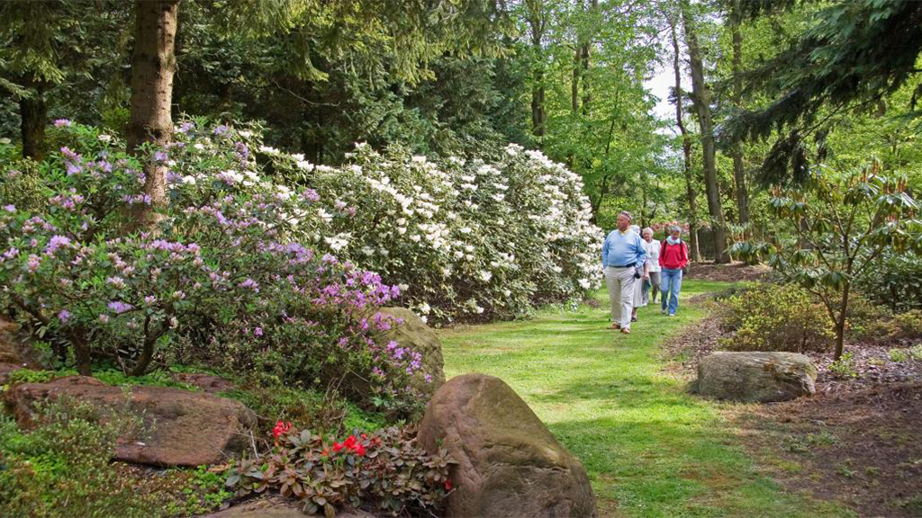 Rhododendron Haven