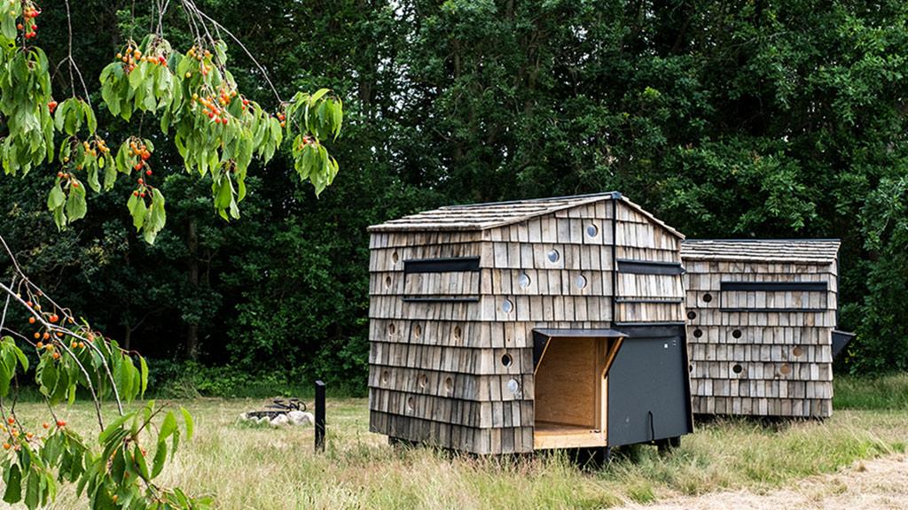 Slå teltet op i plantagen | AabybroPosten.dk