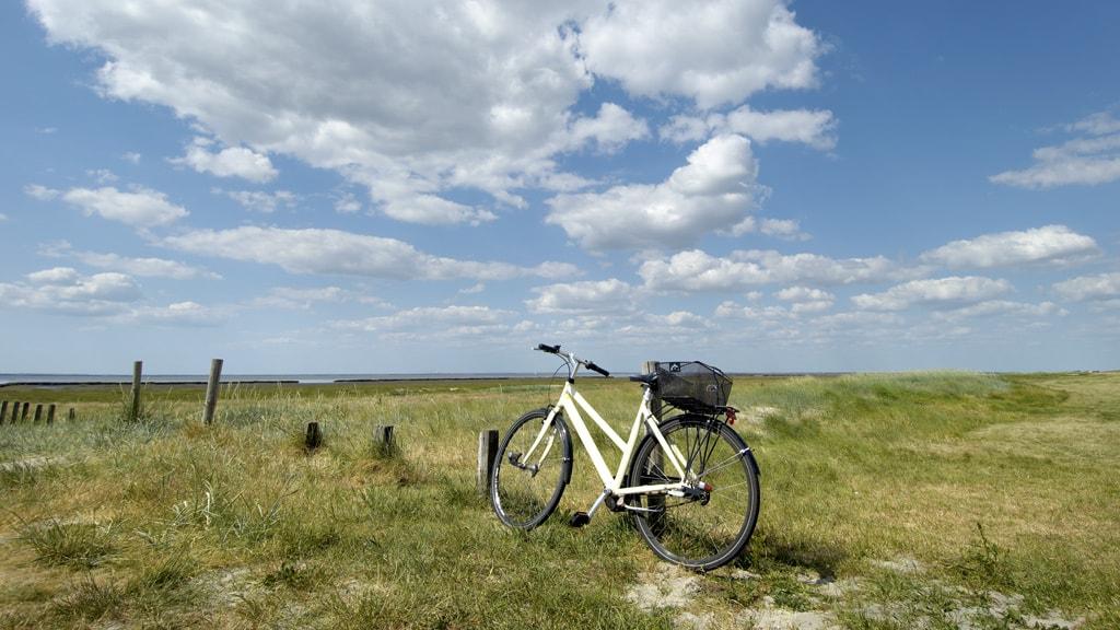 Cykel på diget ved Mandø