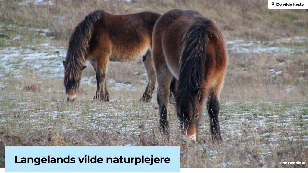 Langelands Vilde Heste