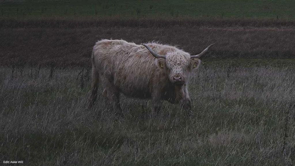MIG 23 på Kvæg på Skovsgaard