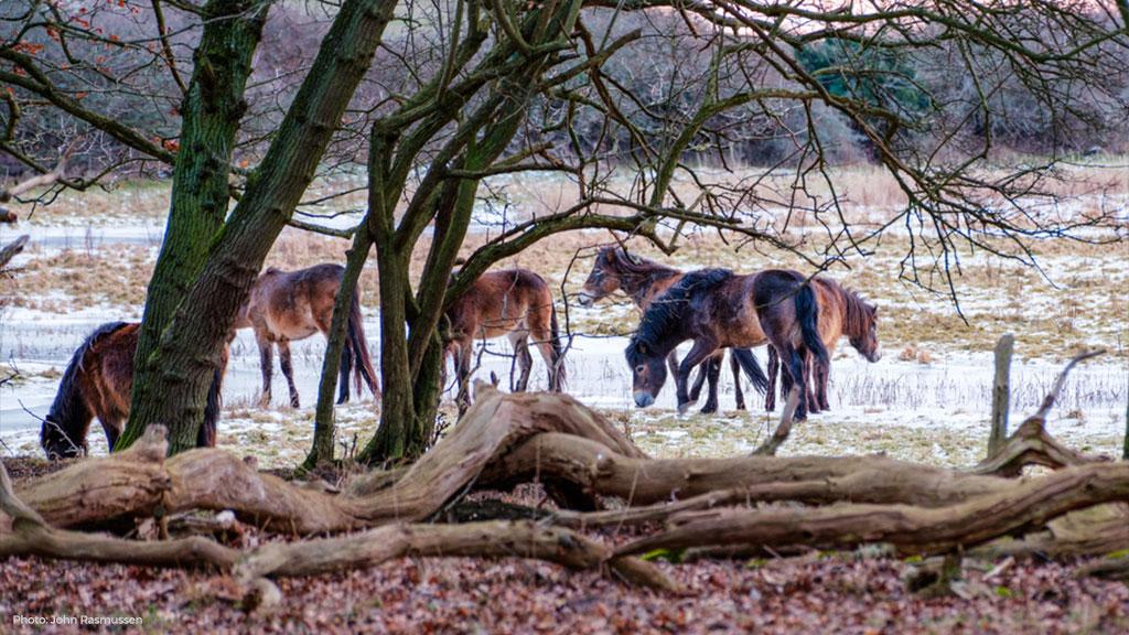 MIG 23 på Vilde heste på Skovsgaard