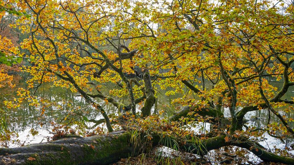 Hennetved Haver på Sydlangeland