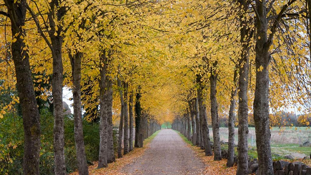 Skovsgaard Gods på Sydlangeland