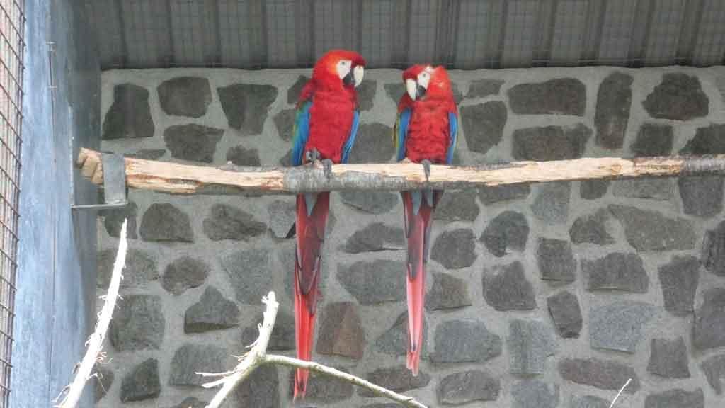Danmarks Fugle Zoo