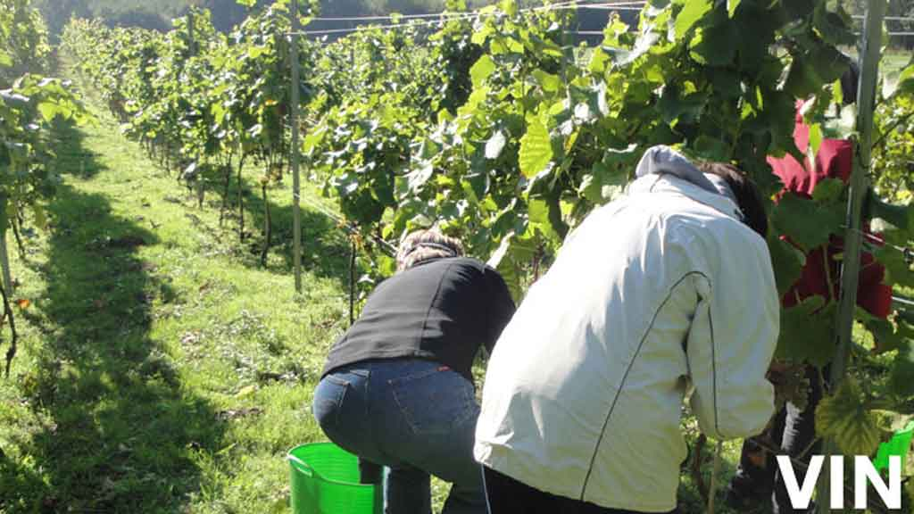 Agger Vin og Parkgolf | Visitfyn