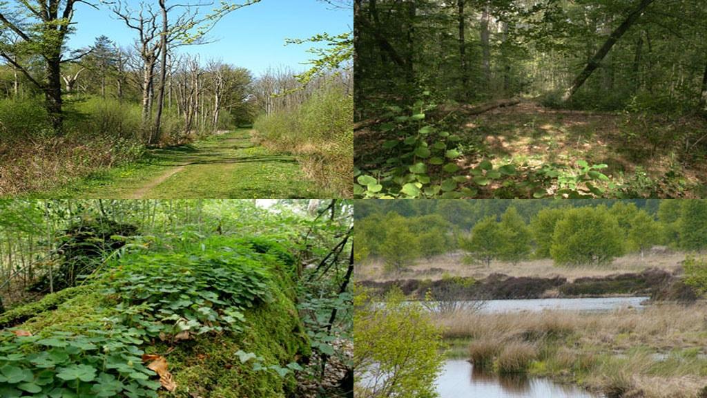 Draved skov og Kongens Mose