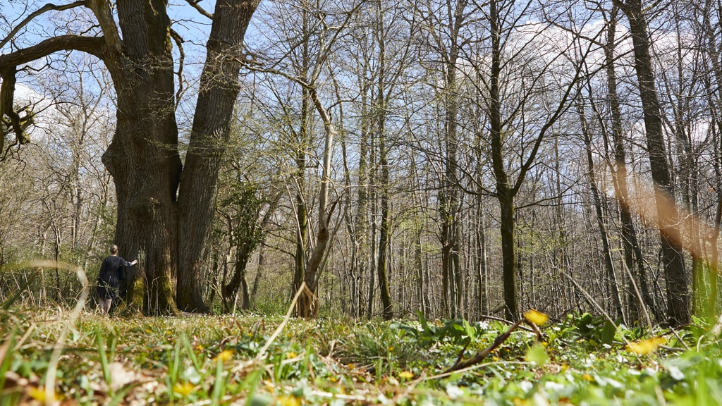 Skov i Kolding