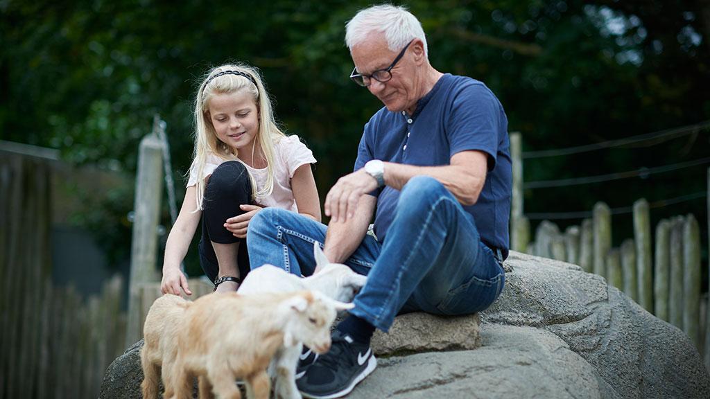 store bryster escort rabat til Odense Zoo