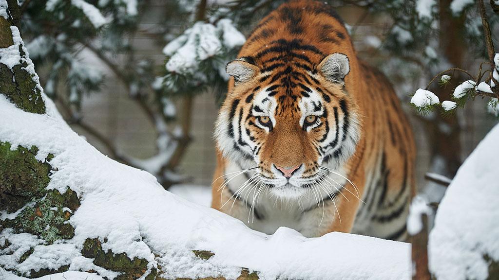 en dreng rabat til Odense Zoo