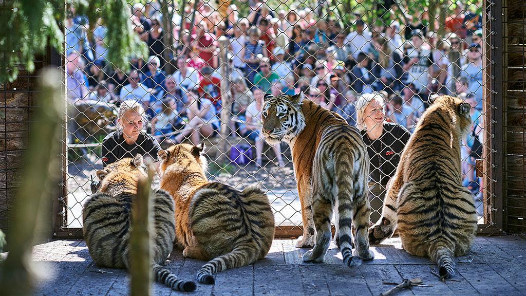 zoo Sjælland bordel i Odense