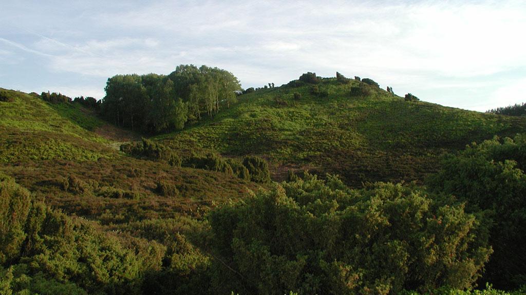 VisitViborg